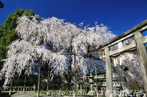 11040403大石神社.jpg