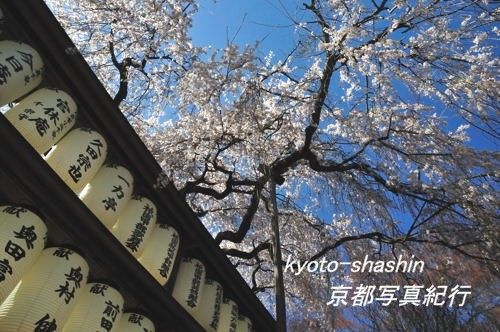 11040405大石神社.jpg