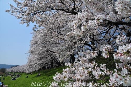 11041003淀川5 [].jpg